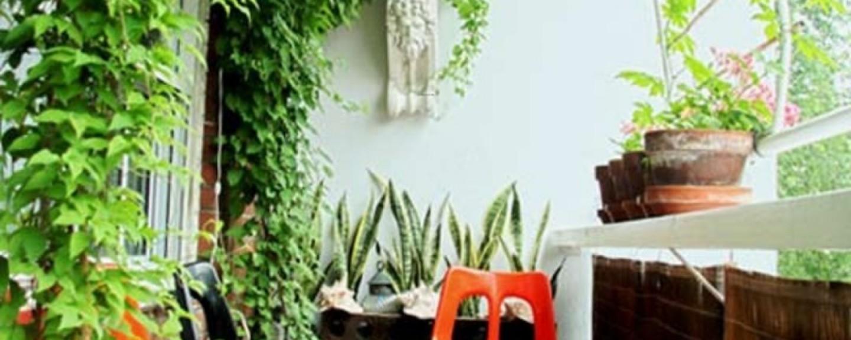 cropped-87e26-balcony-garden-ideas-pictures-balcony-garden-ideas-pictures-garden-800x10641.jpg